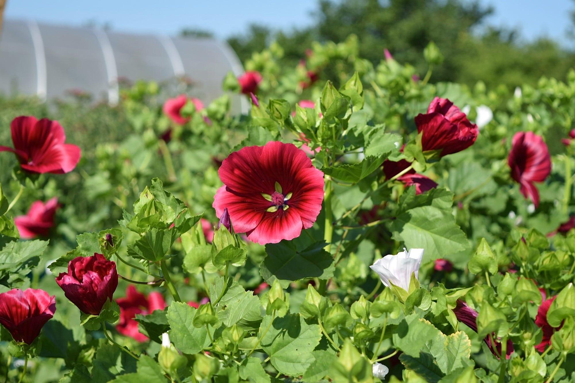 Sponsor a flower bed