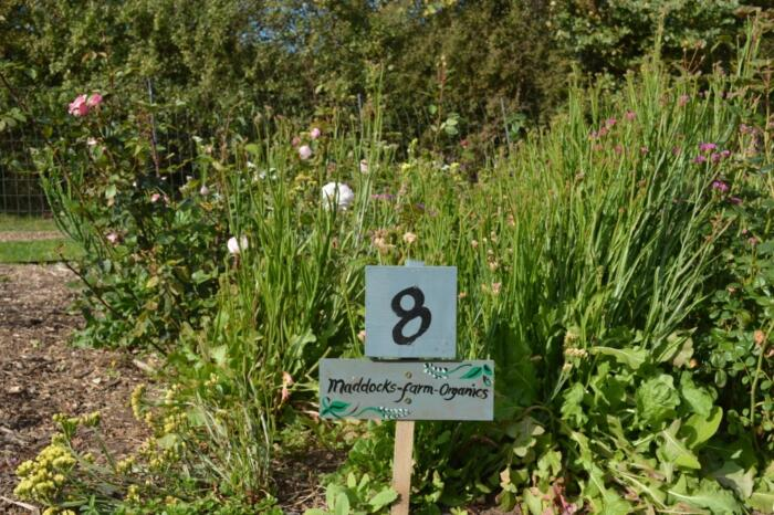 Sponsor an Organic Blooms flower bed
