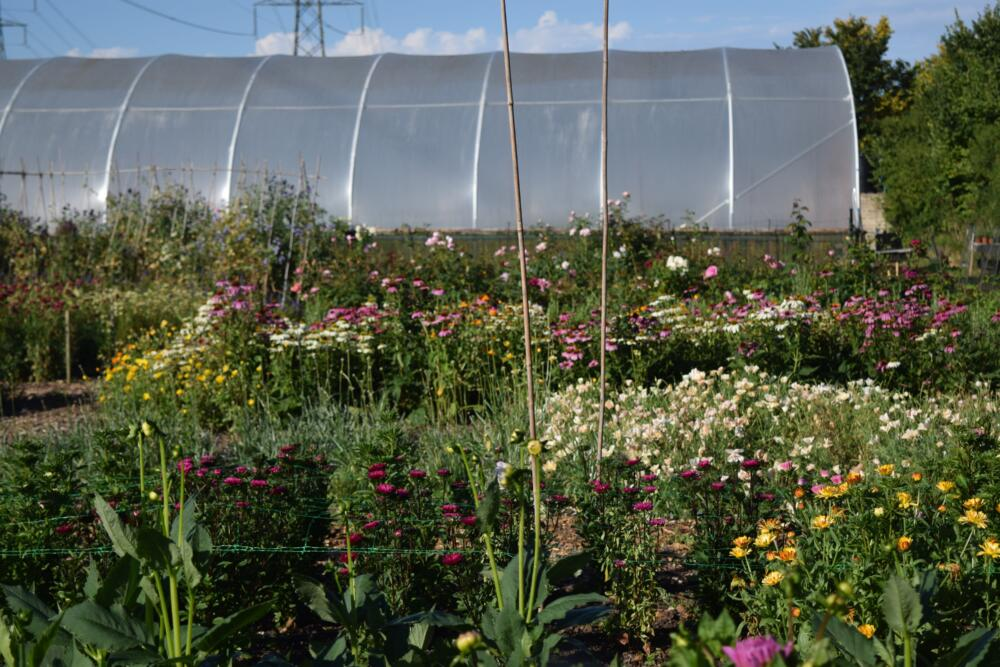 Polytunnel one, ten years on