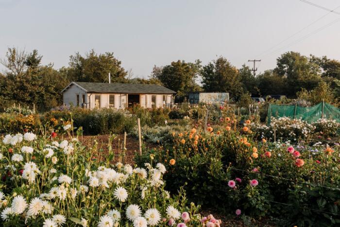 Ten years on: flower studio